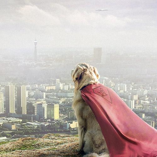 Сайт центра собак-поводырей